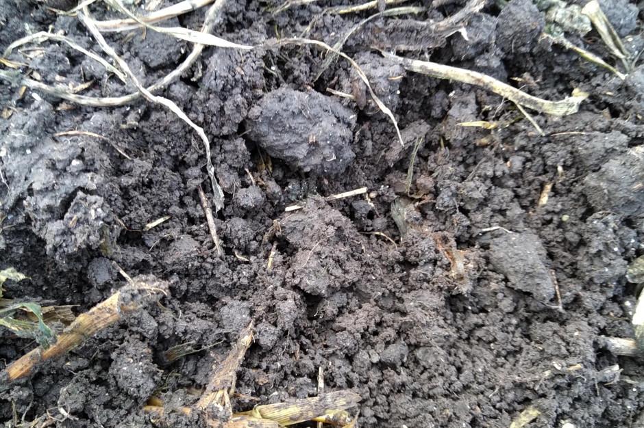 Herbatka kompostowa - nietypowa hodowla dla gleby