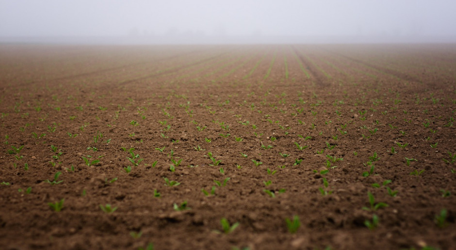 Ukraina: Zbiory zbóż i bobowatych przekroczyły 75 mln ton