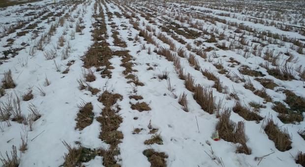 Zadbaj o ... śnieg na polu