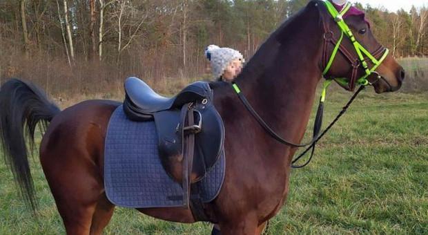 Poszukiwania konia, który zbiegł do puszczy