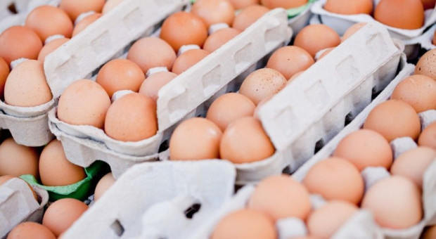 GIS ostrzega przed salmonellą w kurniku, kilka partii jaj wycofano ze sprzedaży