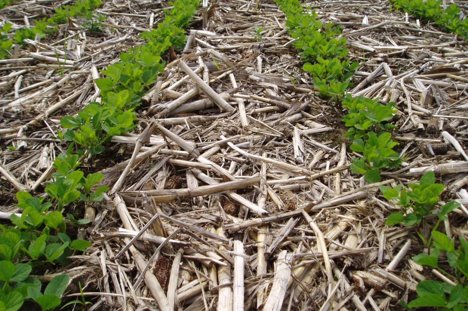 Stanford: uprawa konserwująca zwiększa plony kukurydzy i soi