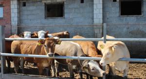 Sektor wołowiny po kryzysie wizerunkowym
