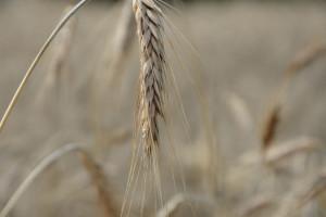 GUS podsumował rok w rolnictwie