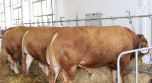 Wierzbicki: Polska wołowina jest postrzegana jako produkt wysokiej jakości
