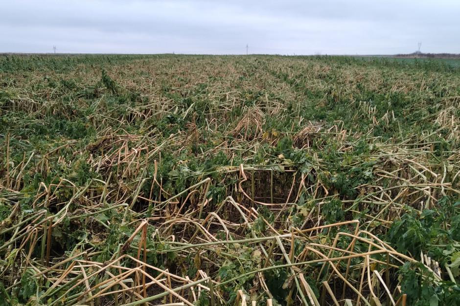 Rolnictwo regeneracyjne - sposób na zdrową glebę i środowisko
