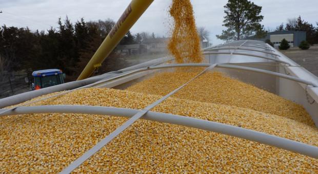 Ukraina: Wzrósł eksport zbóż