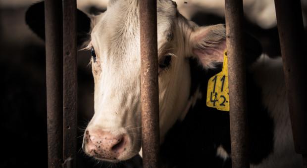 Dobrostan zwierząt: 15 marca start naboru wniosków
