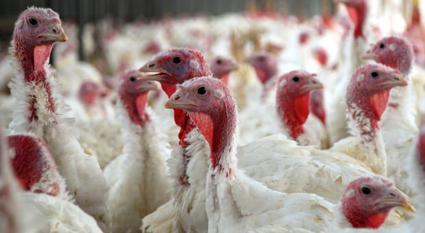 W Lubelskiem wykryto kolejne (5. i 6.) ogniska grypy ptaków