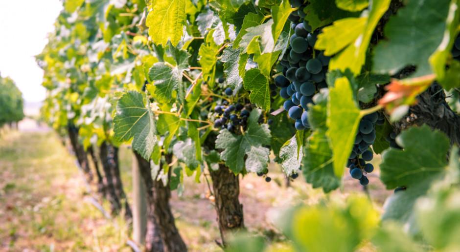 Podkarpackie: Turyści wracają do winnic