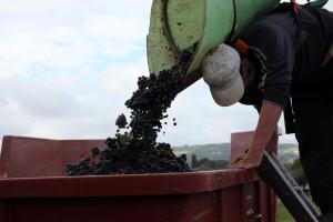 KOWR: Deklaracje dotyczące rynku wina