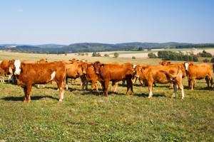Serwis randkowy dla zwierząt gospodarskich