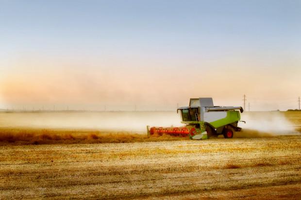 Koniec roku na światowych giełdach: pszenica i rzepak