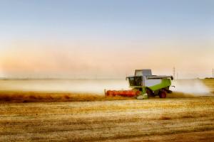 We wszystkich obwodach Ukrainy rozpoczęto zbiór zbóż
