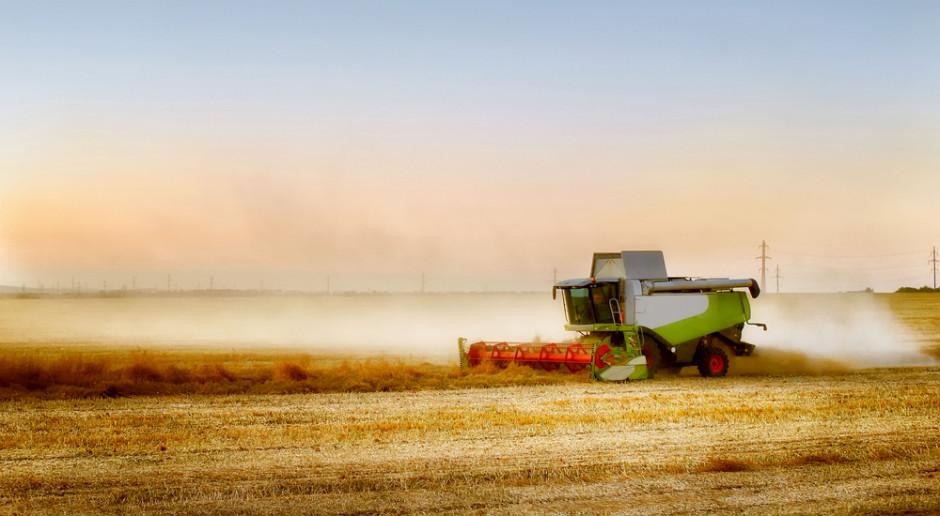 Koszony jest jęczmień. Jakie ceny zbóż podczas żniw 2021?