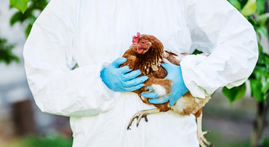 Giżyński: nie wiadomo, skąd w Polsce wzięła się grypa ptaków