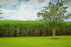 Biopaliwa zajmują tylko 5 procent areału na świecie