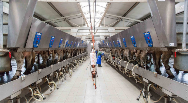 Spadek cen mleka możliwy ze względu na pogodę