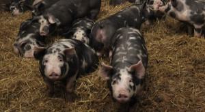 Już niedługo rzeźnie rolnicze - limity dla uboju zwierząt