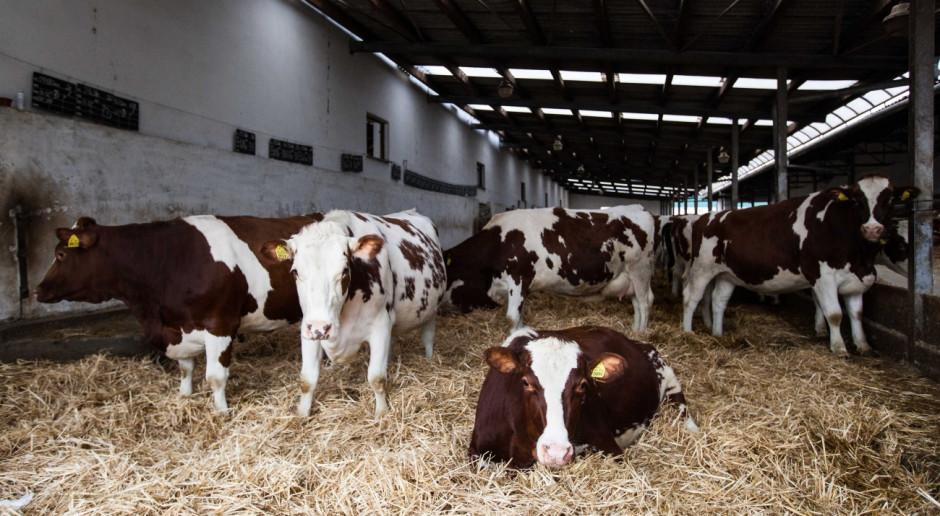 Konferencje Farmera: Hodowla bydła a klimat