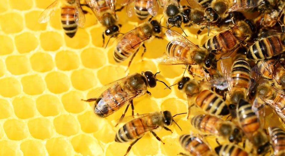 Przebieg wiosennej aury trudny dla pszczół i pszczelarzy