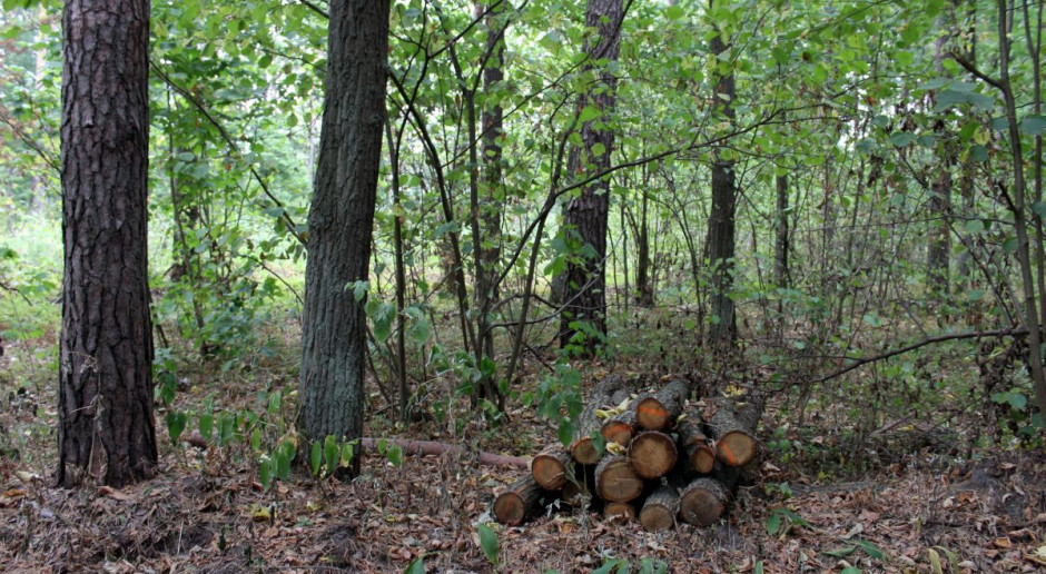 W lasach Podkarpacia coraz częściej można spotkać żmije