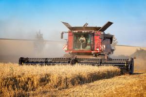 W 2019 roku na Białorusi zebrano 7,3 mln ton zbóż
