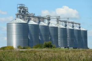Giełdy krajowe: Zmiany cen zbóż zróżnicowane z przewagą wzrostów