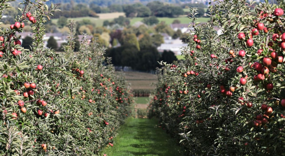 Licytacja gospodarstwa znanego sadownika. Pod młotek 184 hektary!