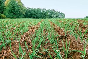 Opinie rolników po roku uprawy bezorkowej