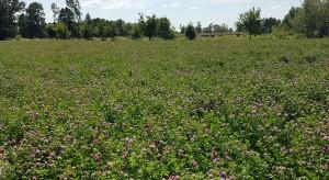 Carbon farming - sposób na gromadzenie węgla w roślinach i glebie