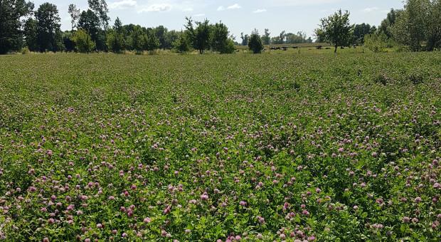 Carbon farming - gromadzenie węgla w roślinach i glebie