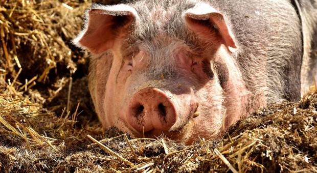 Zmiany w uboju zwierząt z konieczności