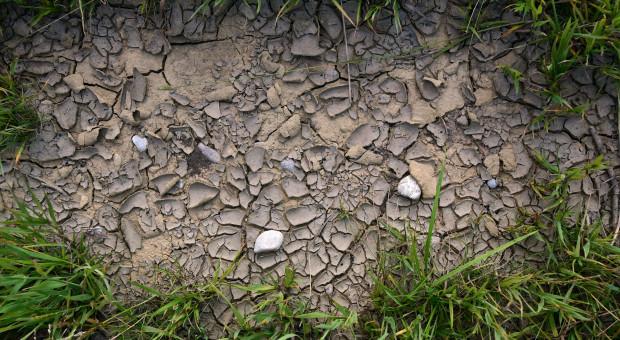NIK sprawdzi walkę z suszą