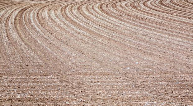 Niemcy: Wzrosły ceny gruntów rolnych z BVVG, ceny dzierżawy prawie bez zmian