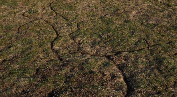 Niemcy: Plaga myszy dotknęła 150 000 ha