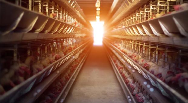 Wielkopolskie: wykryto ósme ognisko ptasiej grypy