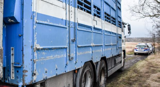 Lubuska policja przemówiła w sprawie wolnych krów z Deszczna