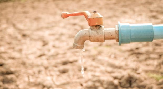 Kiedy pomoc po suszy i dopłaty do kwalifikowanych nasion?