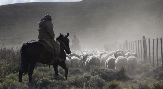 Kazachstan zakazał eksportu zwierząt gospodarskich