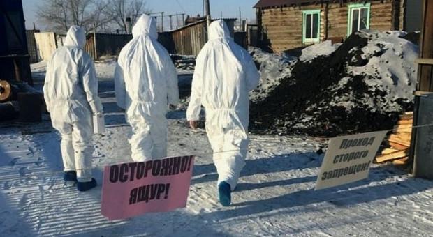 Pryszczyca u bydła i świń w Rosji