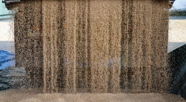 Ruszy obrót pszenicą w ramach Platformy Żywnościowej