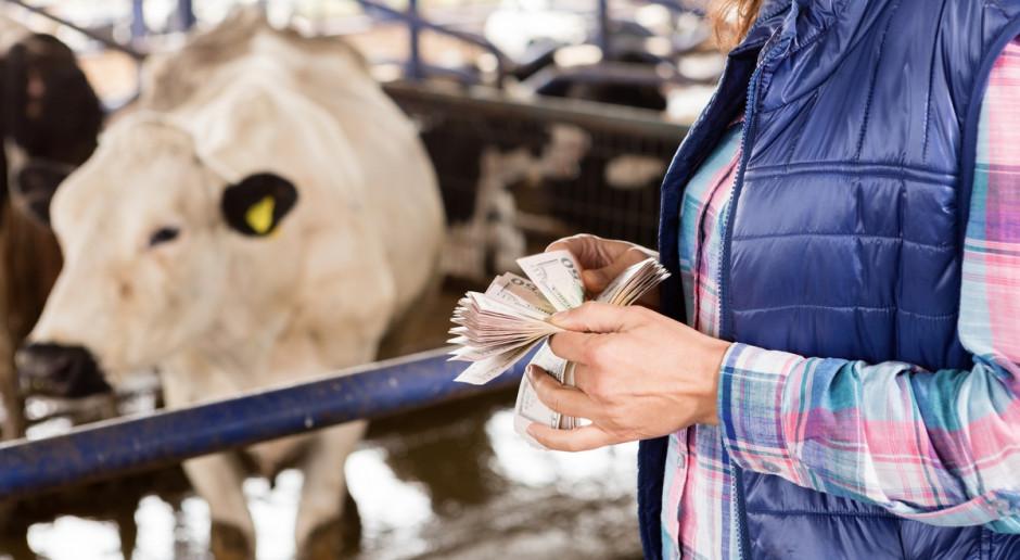 Na czym przyłapać nieuczciwego handlarza przy sprzedaży bydła?