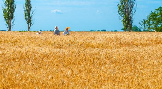 Ukraina: Zebrano ponad 75 milionów ton zboża i bobowatych