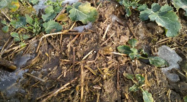 Zasolenie gleby a susza