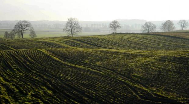 KOWR: w ubiegłym roku wydzierżawiono 44,3 tys. ha ziemi