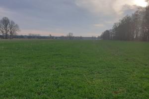 Jak uprawa międzyplonów wpływa na zapas wody w glebie?