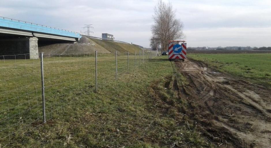 Przejścia dla dzików wzdłuż A4 na Opolszczyźnie zamknięte. Będą też ogrodzenia wzdłuż innych autostrad