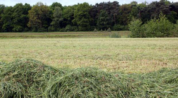 Dostosowanie składu gatunkowego łąk i pastwisk do zmieniającego się klimatu