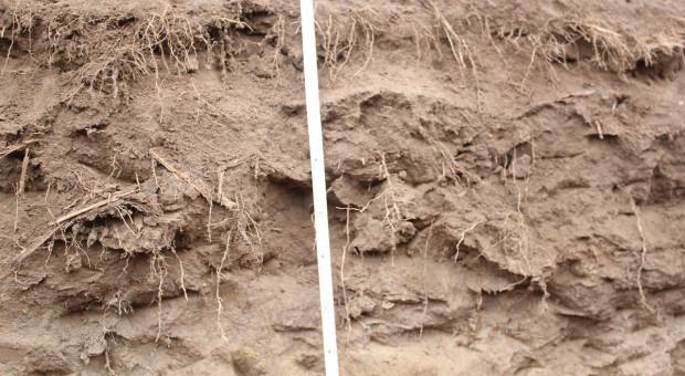 Jak zatrzymać wodę w glebie i ograniczyć efekty suszy?